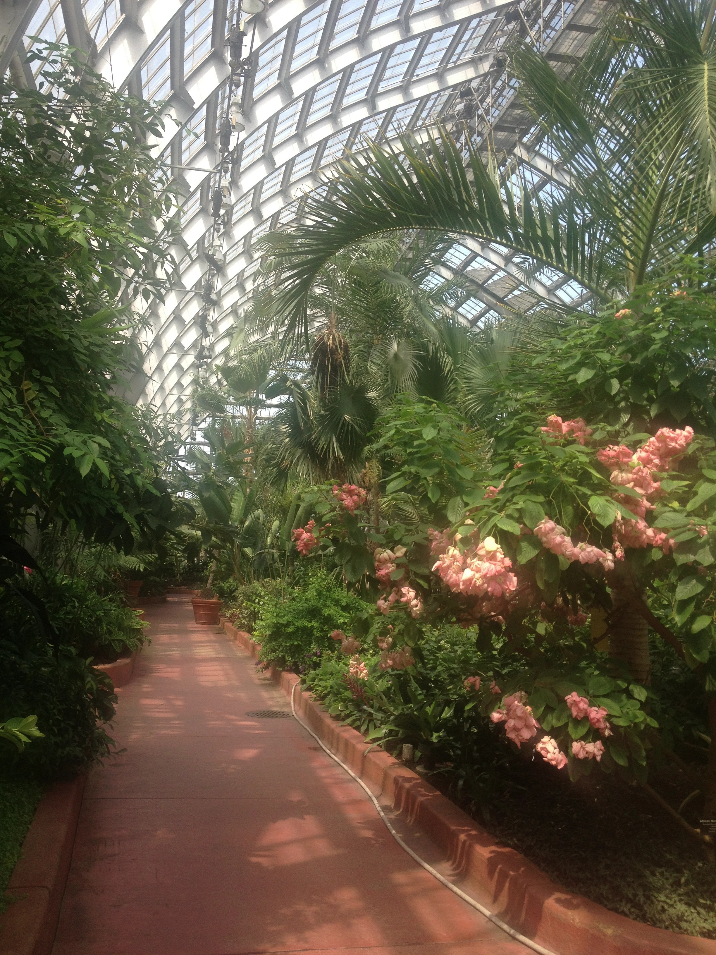 Hurray, The Garfield Park Conservatory!