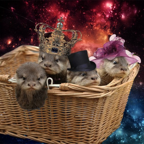 Baby otters in space, because why not? AKA procrastination space station