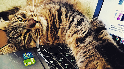 Another cat on a Laptop