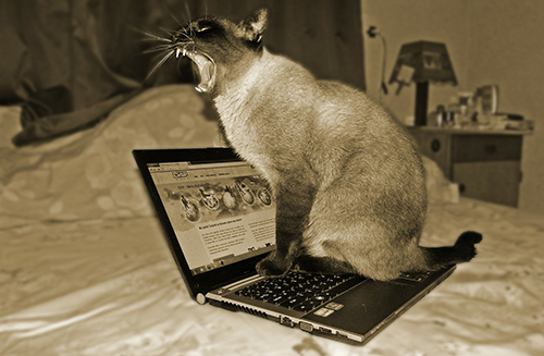 Cats and the Creative Writing Process