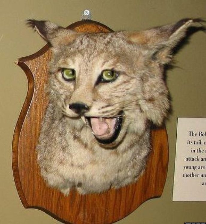 Taxidermists in Love
